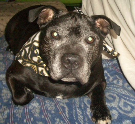 Doogs - Staffie Rescue: http://www.staffierescue.co.uk/killing-me-softly/doogs-2/