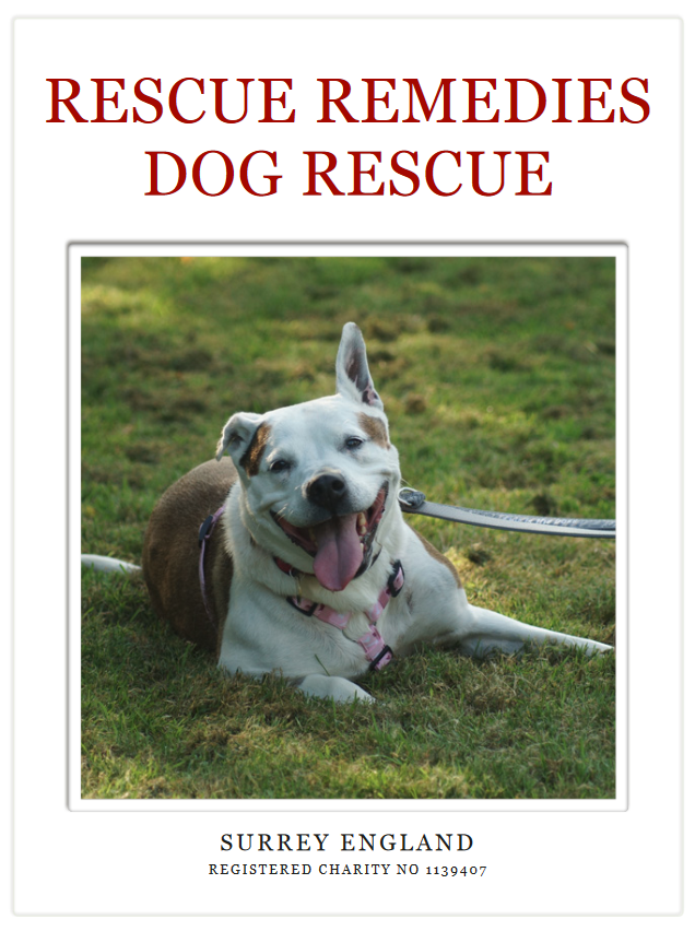 Please download our mobile/tablet pdf file and read about our rescue. Thank you